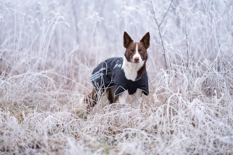 Non-stop Dogwear Black Jacket Light Review | Dog Gear Review
