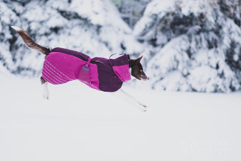 Non-stop Dogwear Glacier Jacket Review | Dog Gear Review