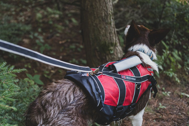 Non-stop Dogwear Safe Life Jacket Review | Dog Gear Review