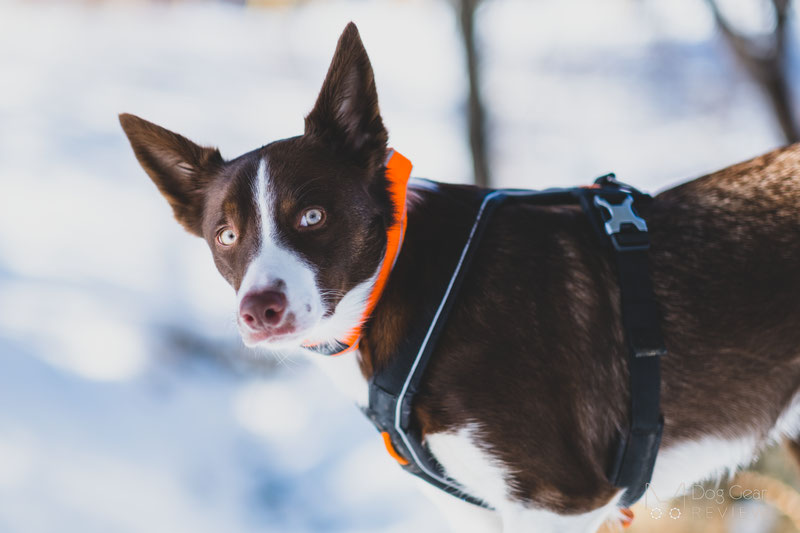 Non-stop Dogwear Line Harness Review | Dog Gear Review