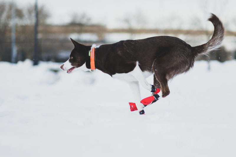 Non-stop Dogwear Long Distance Bootie Review | Dog Gear Review