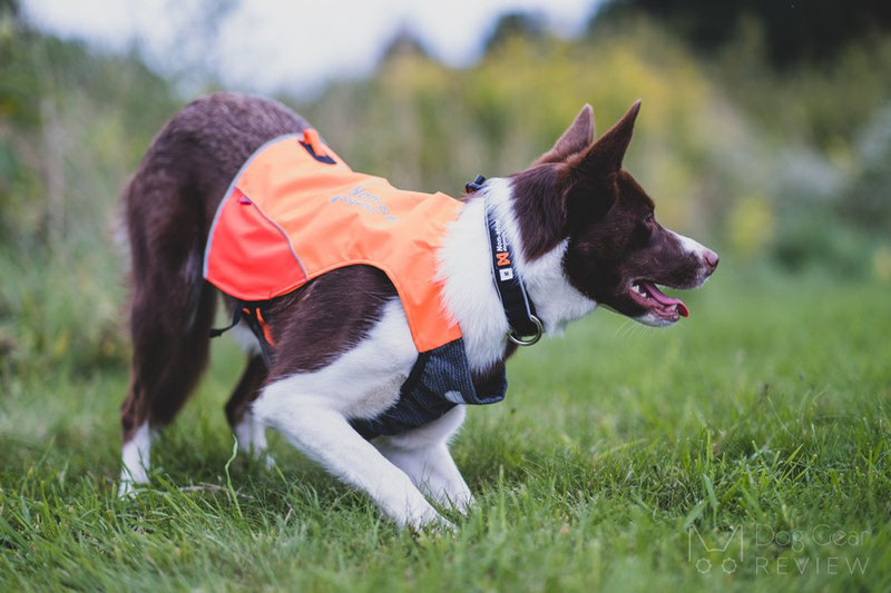 Non-stop Dogwear Protector Vest Review | Dog Gear Review