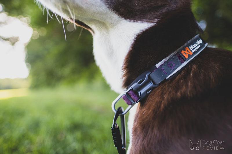 Non-stop Dogwear Roam Collar Review | Dog Gear Review