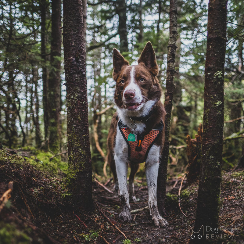 Non-stop Dogwear Ultra Harness Review | Dog Gear Review