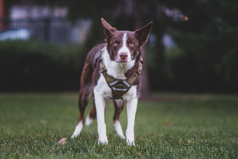 OneTigris Fire Tanker Harness Review | Dog Gear Review