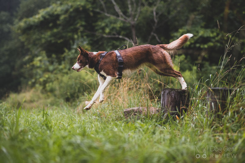 OneTigris Goliath Training Harness Review | Dog Gear Review