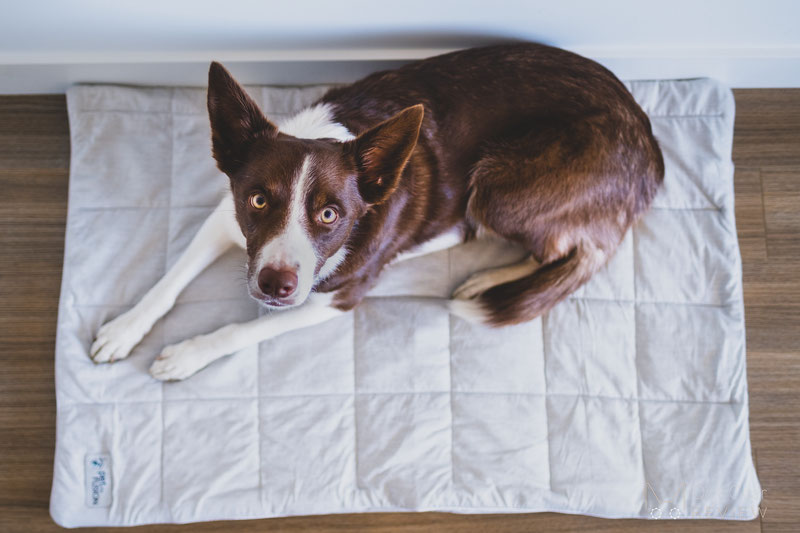 PetFusion Premium Cooling Blanket Review | Dog Gear Review