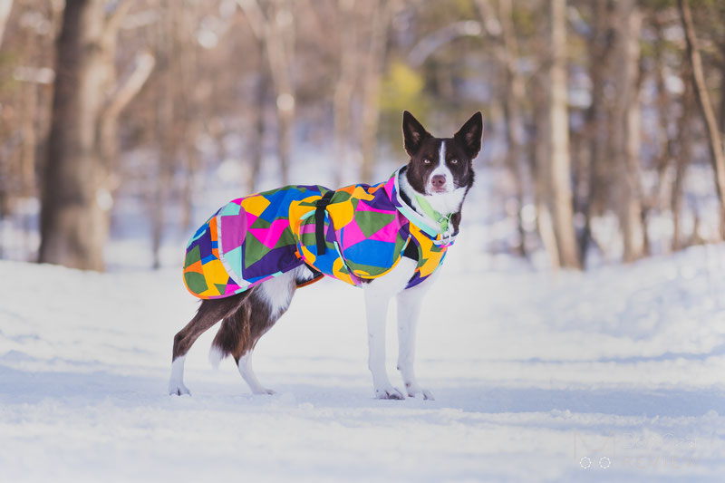 Pomppa KevytPomppa Review | Dog Gear Review