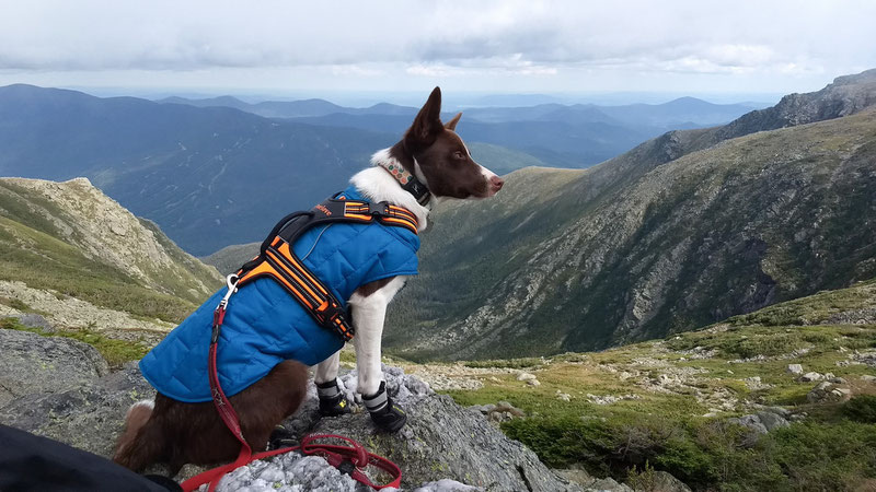QUMY Boots Review | Dog Gear Review