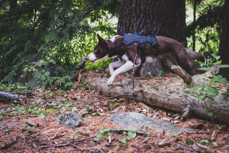Rabbitgoo Hiking Harness Review | Dog Gear Review