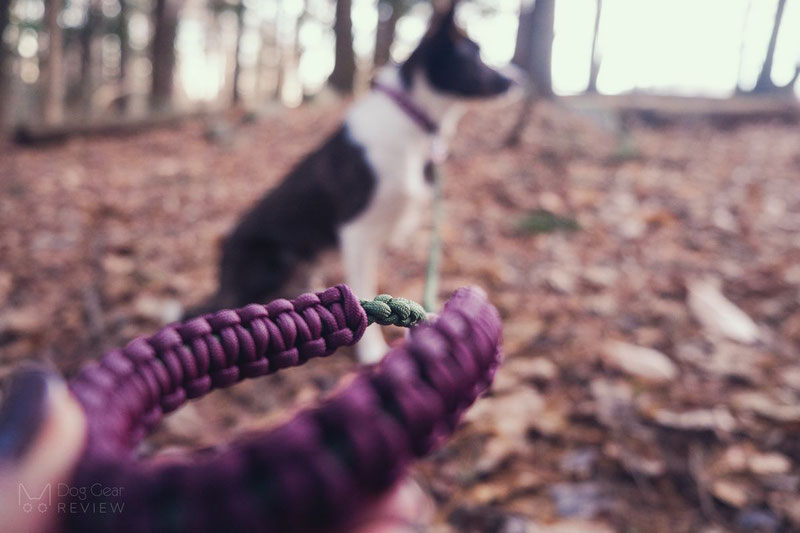 Rayzi's ParacorDog Design Leash and Collar Review | Dog Gear Review