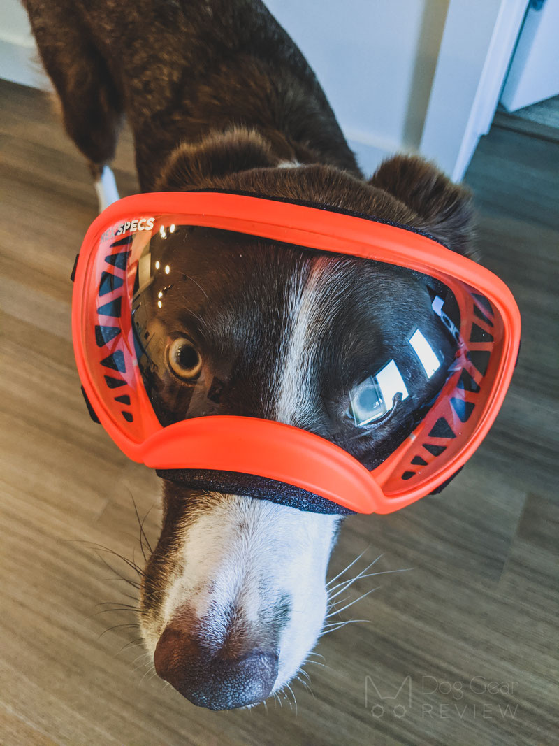 Rex Specs Goggles Review | Dog Gear Review