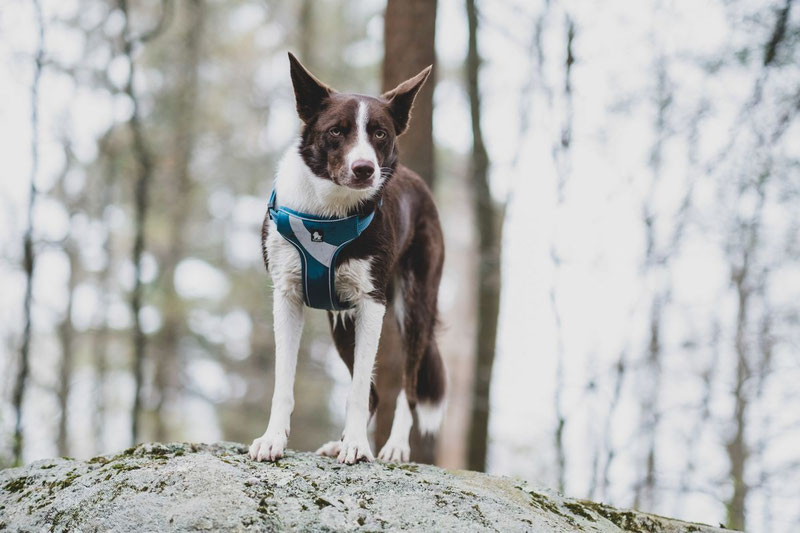 Truelove TLH5991 Harness Review | Dog Gear Review