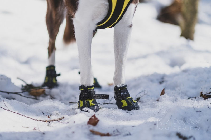 Truelove TLS3961 Boots Review | Dog Gear Review