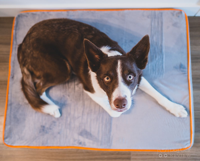 Toozey Orthopedic Memory Foam Bed Review | Dog Gear Review