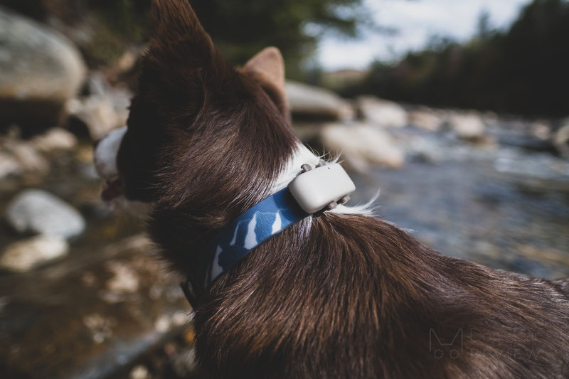 Tractive GPS Tracker and Activity Monitor Review | Dog Gear Review