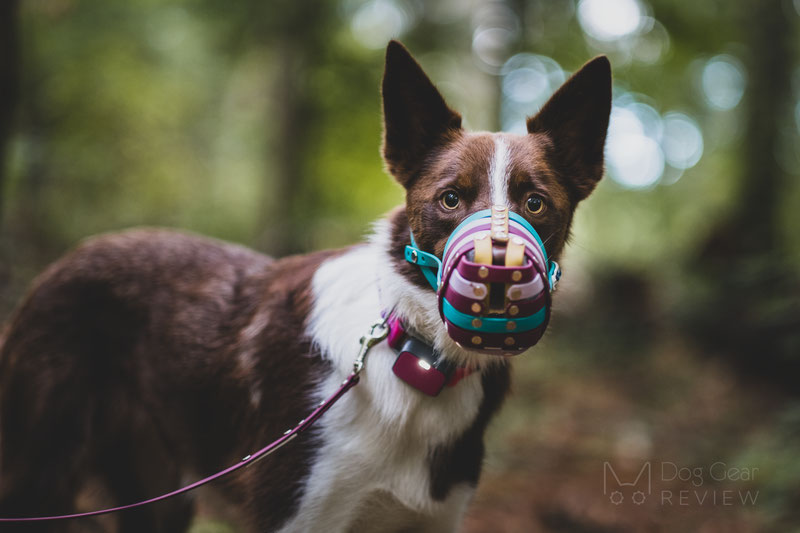 Trust Your Dog Biothane Muzzle Review | Dog Gear Review