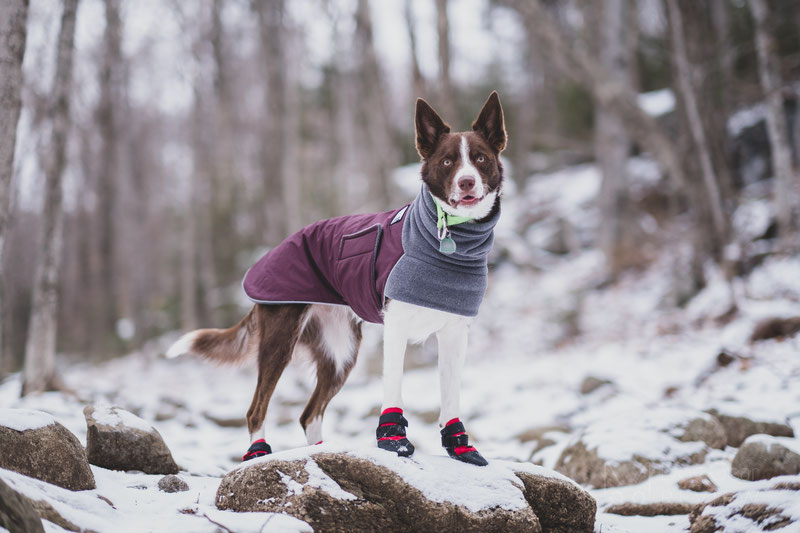 Ultra Paws Rugged Boot Review | Dog Gear Review