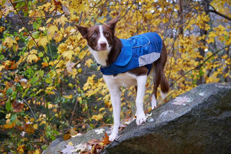 UsefulThingy Coat Review | Dog Gear Review