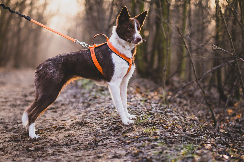 Vagus Sport Harness Review | Dog Gear Review