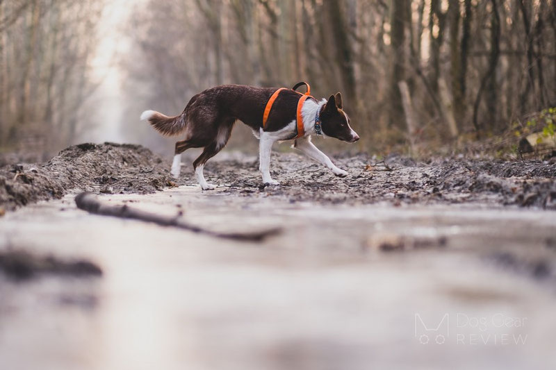 Vagus Sport Harness Review   Dog Gear Review