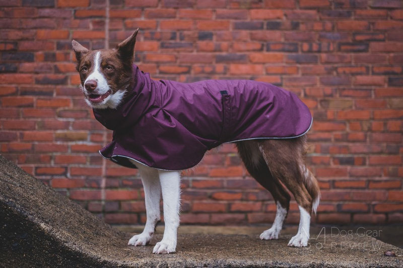 Voyagers K9 Apparel Rain Coat Review | Dog Gear Review