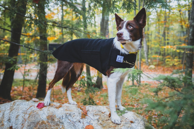 Voyagers K9 Apparel Tummy Warmer Review | Dog Gear Review