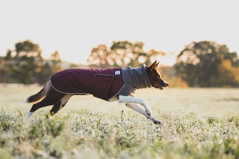 Voyagers K9 Apparel Winter Coat Review | Dog Gear Review