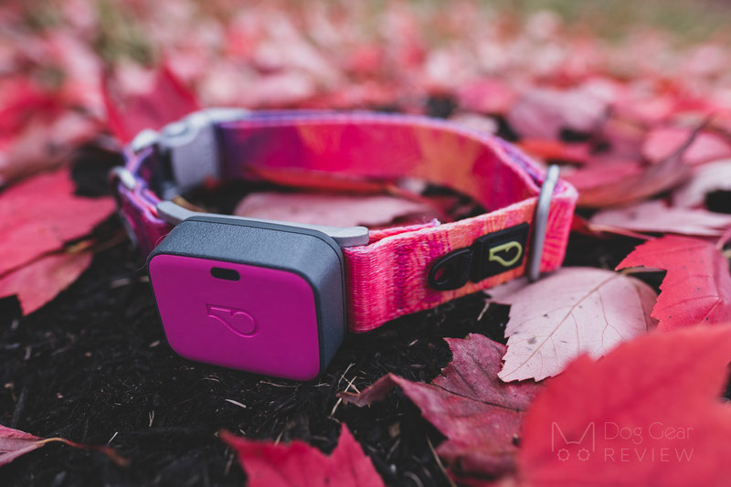 Whistle Go Explore - Health and Location Tracker Review | Dog Gear Review