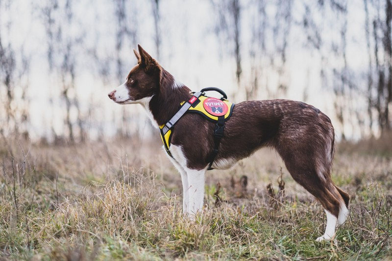 Yutipet RnD Safety Harness Review | Dog Gear Review
